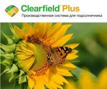 Семена Подсолнечника гибрид Махаон КЛП